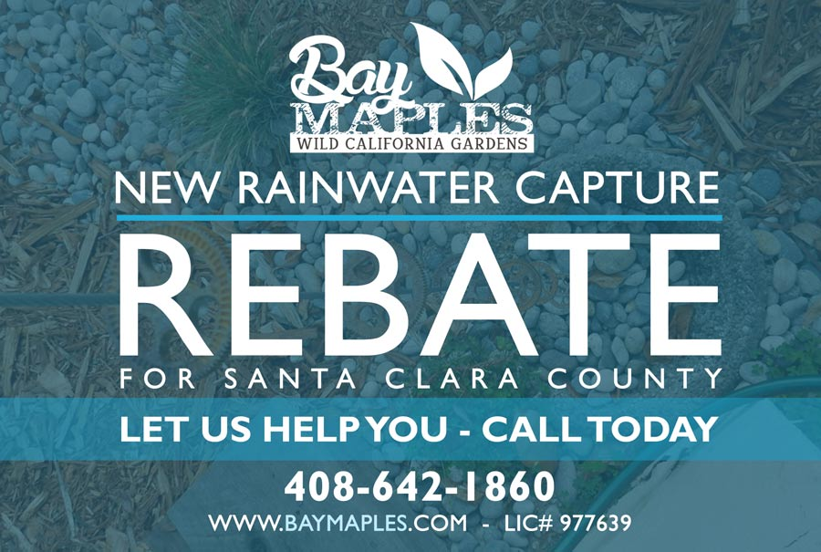 Bay Maples Rebates
